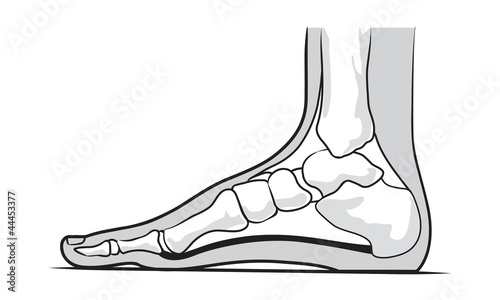 Medial foot anatomy - Buy this stock vector and explore similar ...