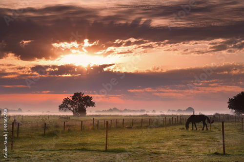 Poster Jaune horse silhouette on morning pasture