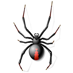 Fototapeta Black Widow spider