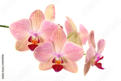 Photo Stands Orchid Orchideenblüten