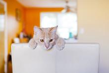 Tabby Cat Scratching Furniture