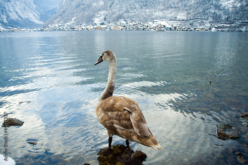 Fotografie, Obraz  Cold and snowy winter in mountain Austria