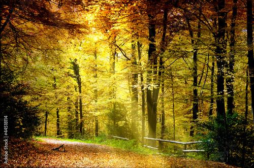 Foto op Canvas Herfst Herbstwald