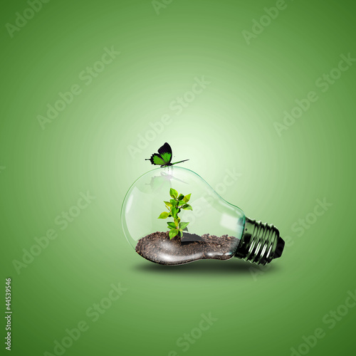 Fotografiet Electric light bulb and a plant inside it