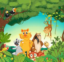 Životinje u šumi