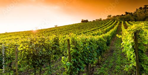 Cadres-photo bureau Vignoble Weingut an der hessischen Bergstraße