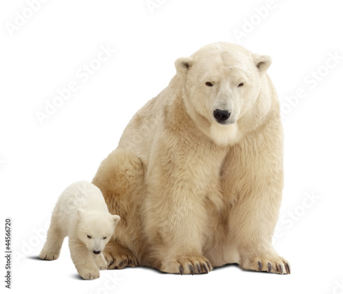 Deurstickers Ijsbeer polar bear with baby. Isolated over white
