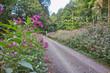 Drüsiges Springkraut / Impatiens glandulifera / Himalayan Balsam