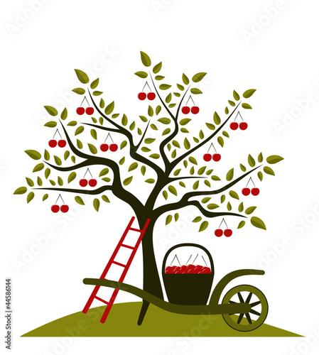 Foto op Canvas Vogels in kooien cherry tree