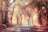 Golden autumn, landscape