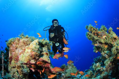 Papiers peints Recifs coralliens Scuba Diver explores coral reef