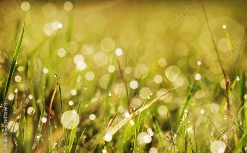 Carta da parati autumn grass with dew