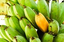 Banana On Tree
