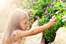 A Little Girl Picks A Flower
