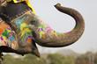 Leinwanddruck Bild - Decorated elephant at the elephant festival in Jaipur