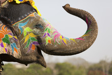 Decorated Elephant At The Elep...