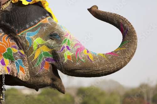 Foto op Plexiglas India Decorated elephant at the elephant festival in Jaipur