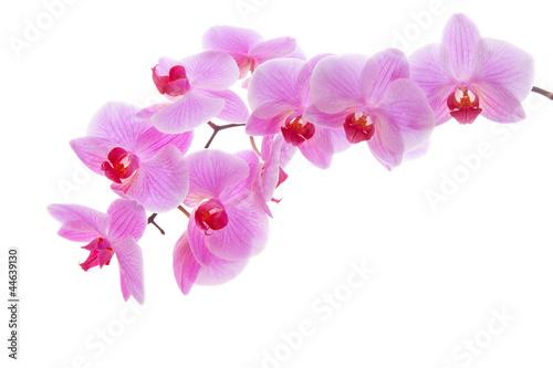 Akustikstoff - blooming orchid  (von Swetlana Wall)