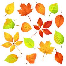 Autumn Leaves. Vector Illustra...
