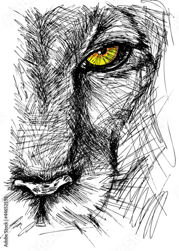 Poster Croquis dessinés à la main des animaux Hand drawn Sketch of a lion looking intently at the camera