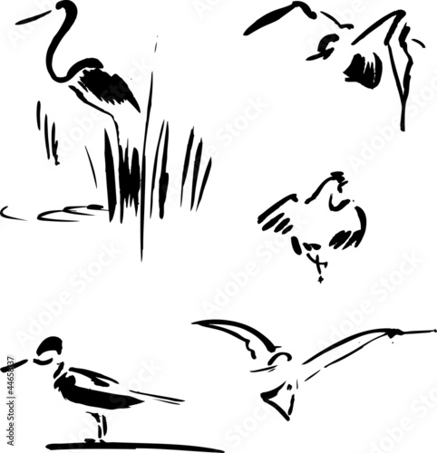 Valokuva  Calligraphy bird set