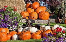 White And Orange Pumpkin Fall Still Life