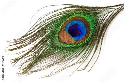 Keuken foto achterwand Pauw peacock feather isolated