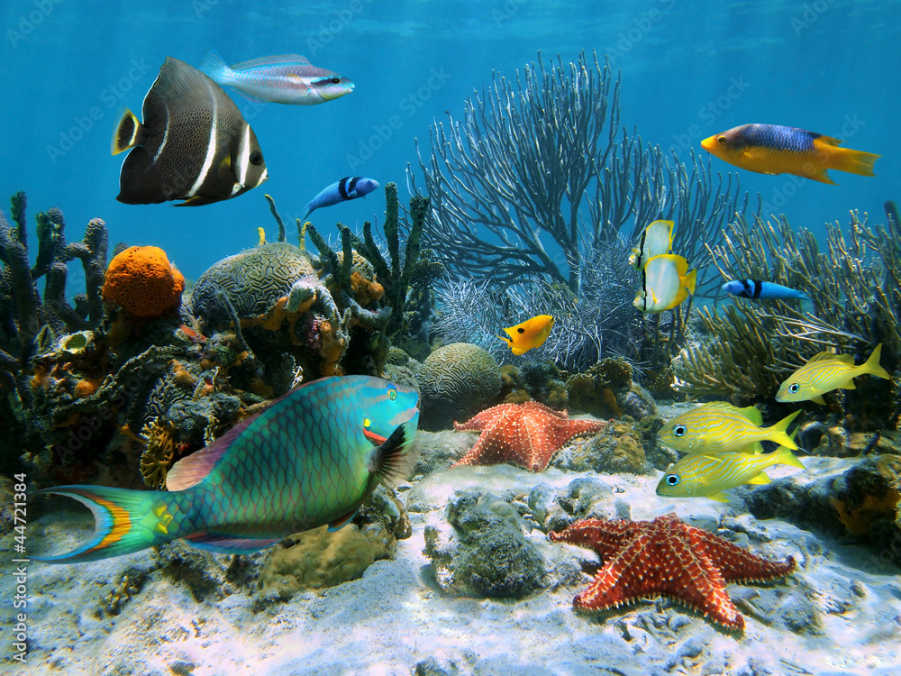 Fototapeta Coral reef with starfish and colorful tropical fish, Caribbean sea