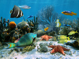 Coral reef with starfish and colorful tropical fish, Caribbean sea