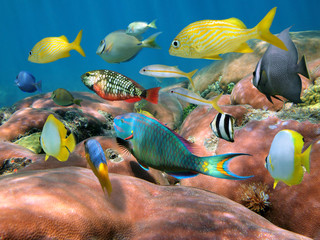 Colorful tropical fish school over coral underwater Caribbean sea
