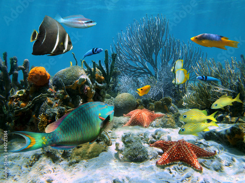 Poster Coral reefs Coral reef with starfish and colorful tropical fish, Caribbean sea