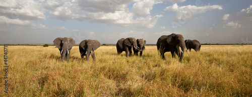 Fotobehang Afrika Elephant Herd on the Move: Walking toward the camera
