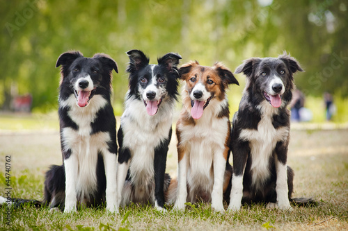 group of happy dogs sittingon the grass Fototapet