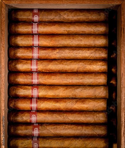 Cigars in humidor Canvas Print