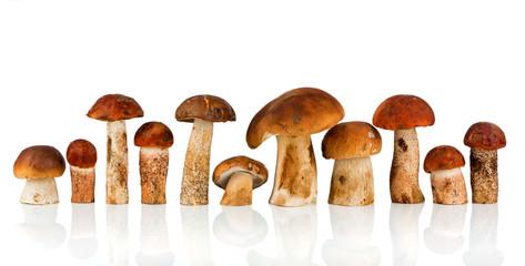 Orange-cap Boletus and porcini mushroom