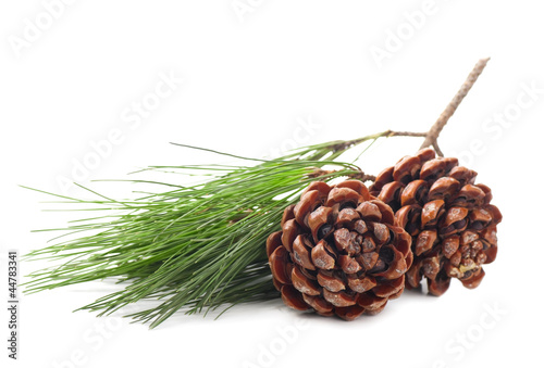 Fotografie, Obraz  Pine cones on a white background