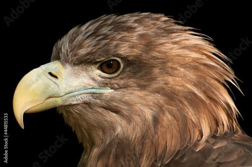 Photo  Eagle Head Profile