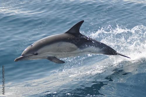 Foto op Plexiglas Dolfijn Delfin