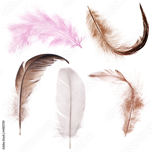 five color feather isolated on white