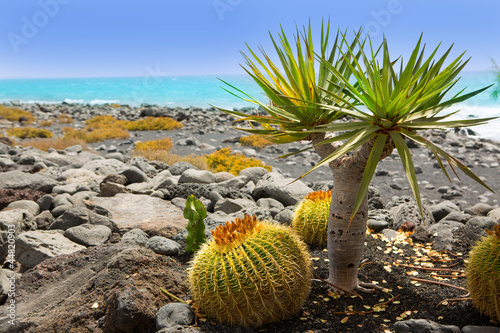 Foto op Canvas Cactus El Golfo in Lanzarote cactus at Atlantic shore