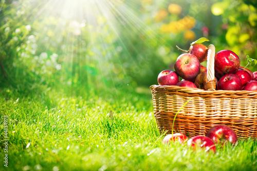 Fotografie, Obraz  Organic Apples in the Basket. Orchard. Garden