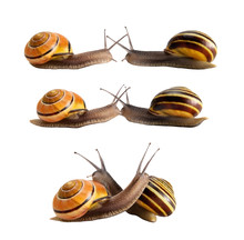 Meeting Of Two Snails