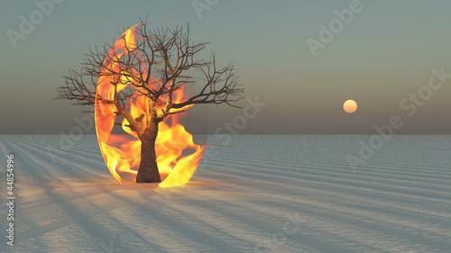 Fotografiet  Fire burning around tree in desert Sands