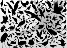 Big And Small Birds Detailed I...
