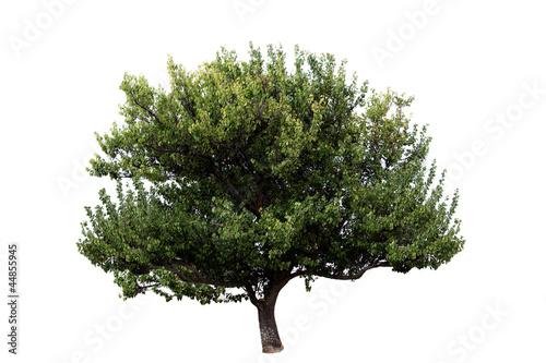 Vászonkép tree isolated