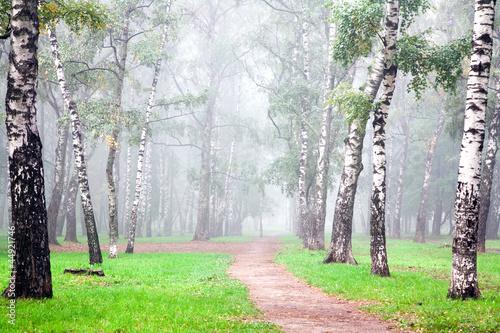 jesienna-gleboka-mgla-w-porannym-brzozowym-gaju