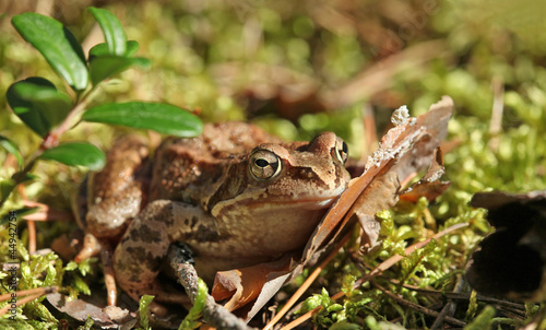 Tuinposter Kikker toad sitting in the grass