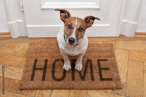 Aluminium Prints Crazy dog dog welcome home entrance