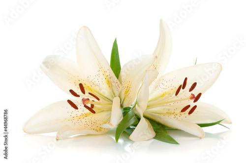 Fototapeta Two white lily obraz na płótnie