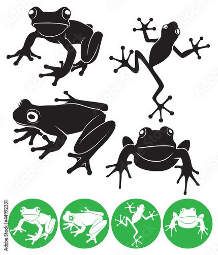 Valokuvatapetti frog